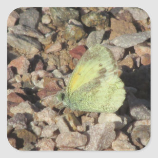Dainty Sulphur Butterfly Stickers