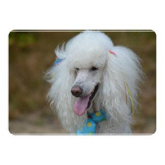 Dainty White Poodle 13 Cm X 18 Cm Invitation Card