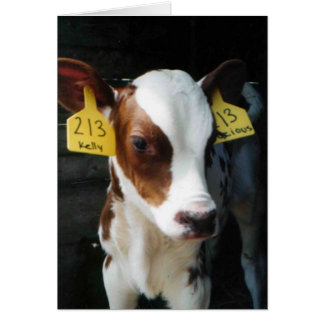 Dairy Calf Calves Baby Cows Farm Kelly Photo Card