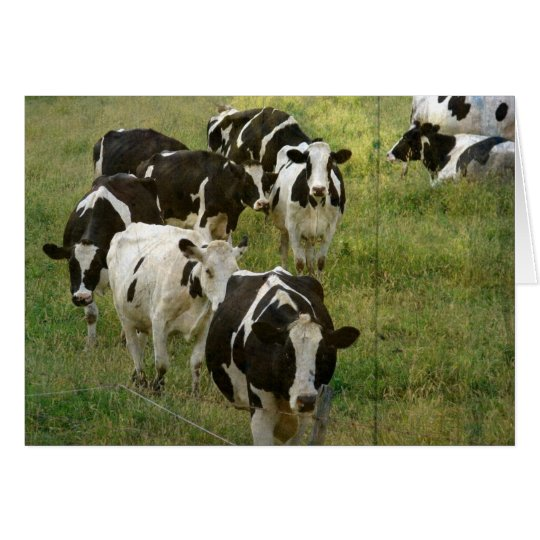 Dairy Cattle Card