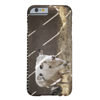 Dairy cow barely there iPhone 6 case
