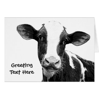 Dairy Cow - Black and White Dairy Calf Card