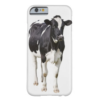 Dairy cow (Bos taurus) on white background Barely There iPhone 6 Case