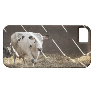 Dairy cow iPhone 5 case