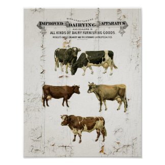 Dairy Cow Vintage Style Old Rustic Cows Poster