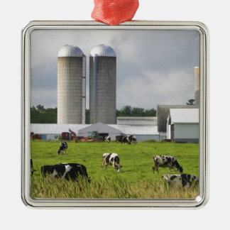 Dairy cows and farm near Taylor County 2 Silver-Colored Square Decoration
