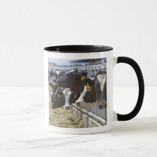 Dairy cows at a feedlot in Grandview, Idaho. Mug