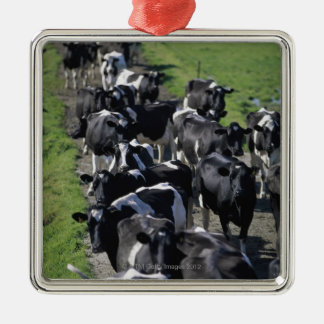 Dairy cows awaiting milking Silver-Colored square decoration