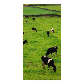 Dairy Farm Customized Photo Card