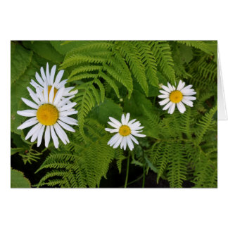 Daisies and Ferns, envelope included Card