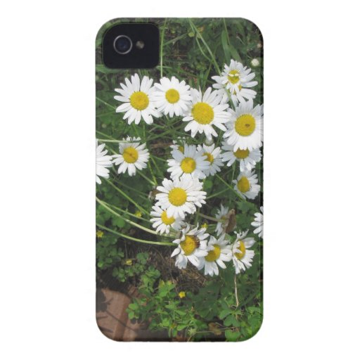Daisies iPhone 4 Case