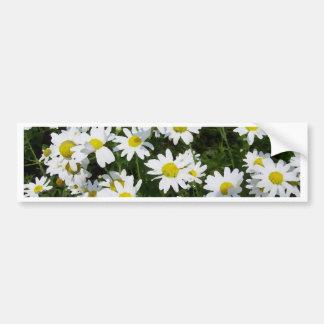 Daisies Daisies and Daisies English Garden Flowers Bumper Sticker