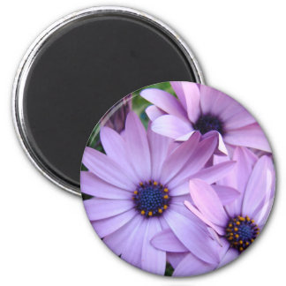 Daisies Flowers 1 Mothers Day Gifts Cards Mugs 6 Cm Round Magnet