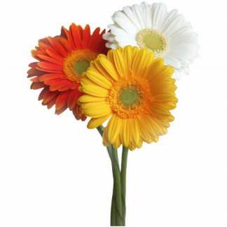 Daisies gerbera bunch standing photo sculpture