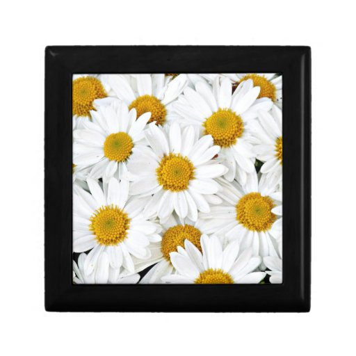 Daisies Gift Boxes