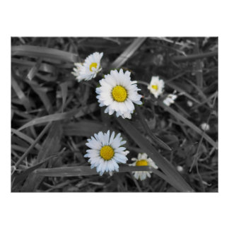 Daisies in Black White and Yellow Print