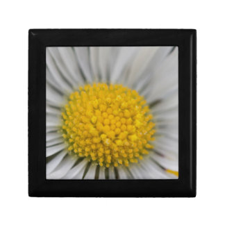 daisies in spring gift box
