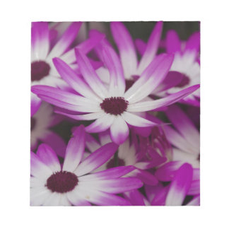 daisies in spring notepad
