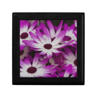daisies in spring small square gift box