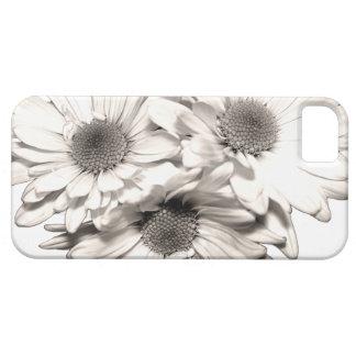 Daisies iPhone 5 Case