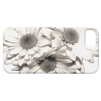 Daisies iPhone 5 Case