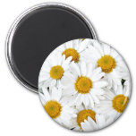 Daisies Magnet