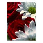 Daisies & Roses Postcard