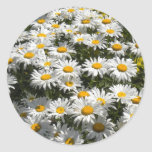 Daisies Stickers