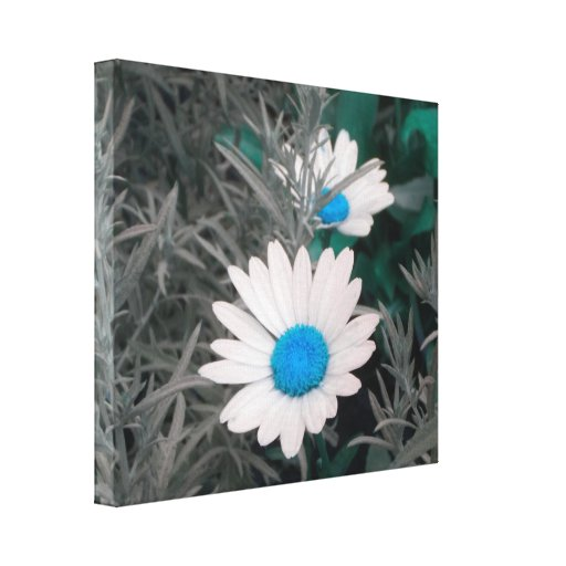 Daisies (w/Blue) Wrapped Canvas Stretched Canvas Print