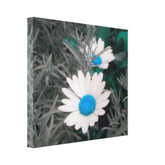 Daisies (w/Blue) Wrapped Canvas Gallery Wrapped Canvas