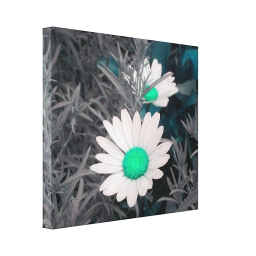 Daisies (w/Green) Wrapped Canvas Canvas Prints
