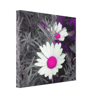 Daisies (w/Pink) Wrapped Canvas Stretched Canvas Print