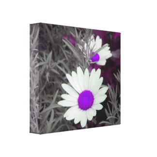 Daisies w/Purple Wrapped Canvas print