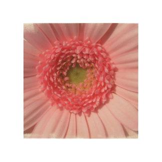 daisy-25.jpg wood canvas