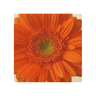 daisy-34.jpg wood prints