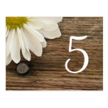 Daisy and Barn Wood Country Wedding Table Number Postcard