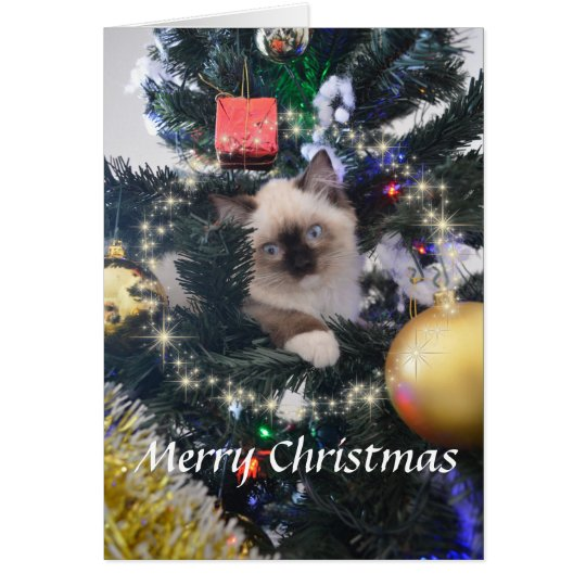 Daisy Blue Kitten Merry Christmas Greeting Card