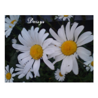 Daisy card/ thank you card