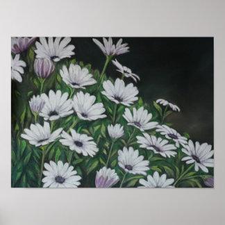 Daisy Chrysanthemum Art Print