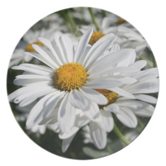 Daisy Collectable Plate