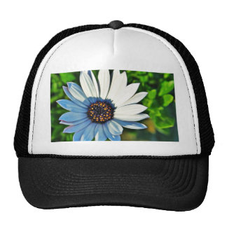 Daisy Daisies Flowers Petals Trucker Hats