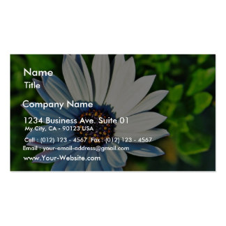Daisy Daisies Flowers Petals Pack Of Standard Business Cards