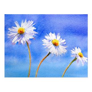 Daisy Daisy Postcard