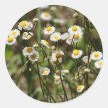 Daisy, Daisy Round Stickers