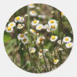 Daisy, Daisy Stickers