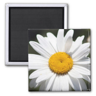 Daisy Darling Square Magnet