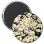 Daisy Delight 6 Cm Round Magnet