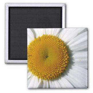 Daisy Detail Refrigerator Magnet