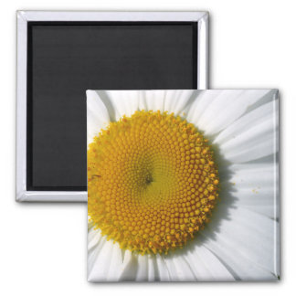 Daisy Detail Square Magnet