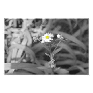 Daisy Dot Photographic Print